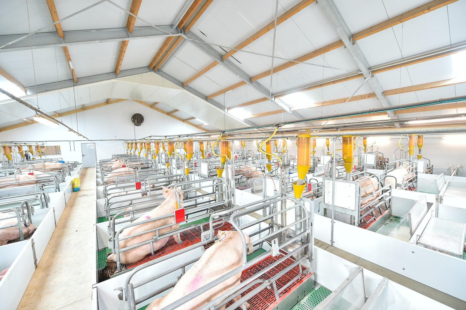 Pig Solutions Header 1
