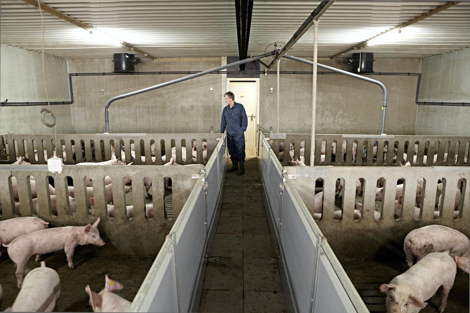 Pig Solutions Header 2