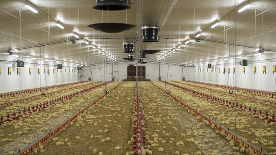 Poultry solutions Climate Header 3