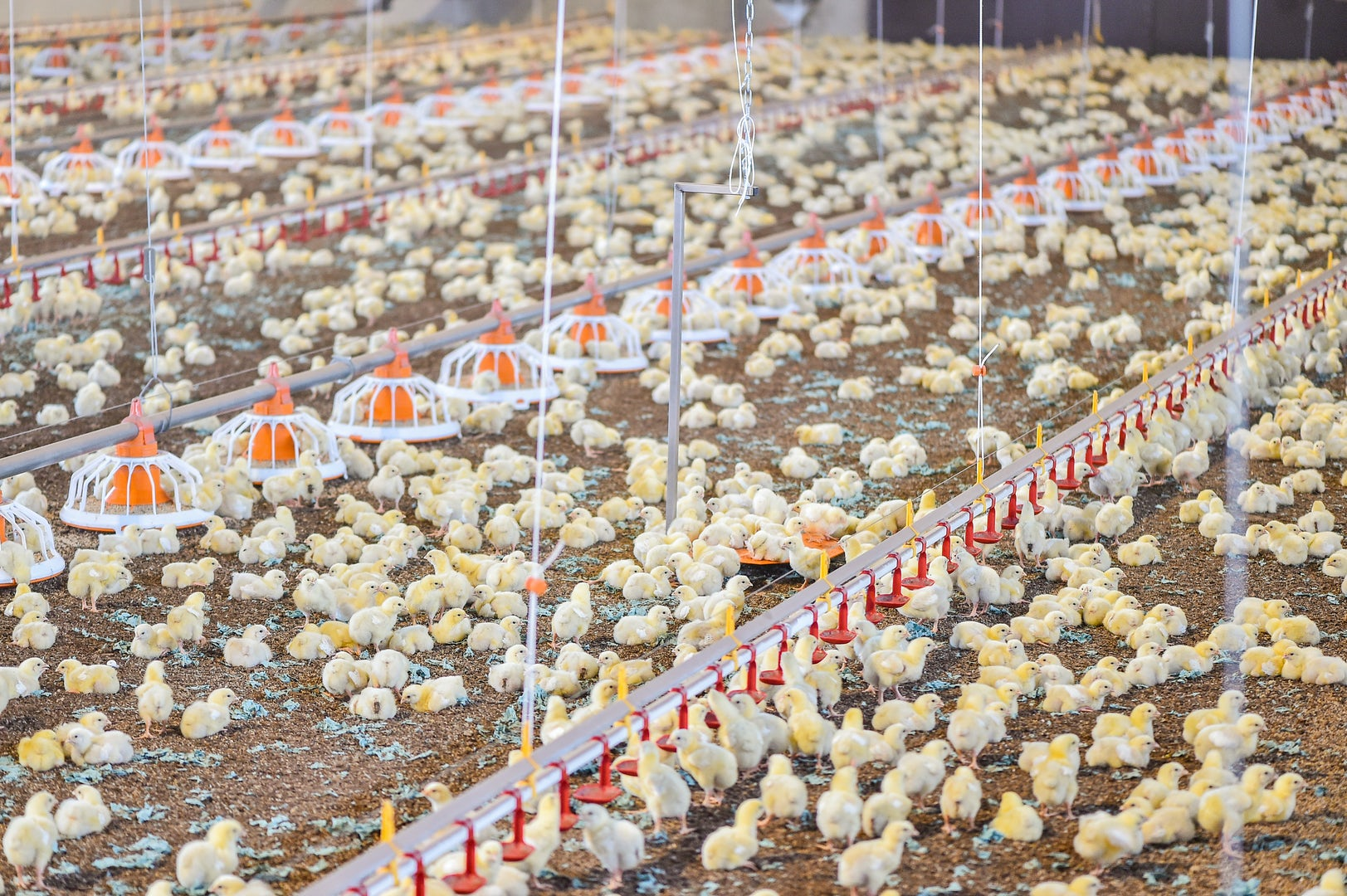 Poultry solutions Header 2