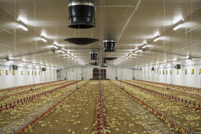 New release Fortica system for poultry market1