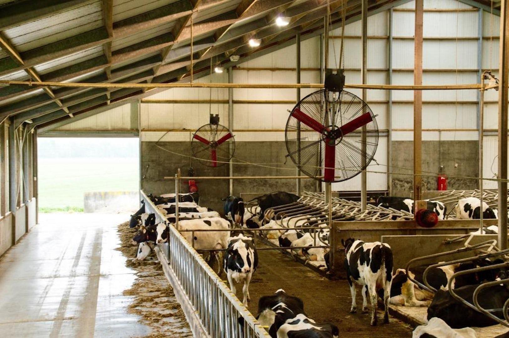 Multifan Dairy Fan
