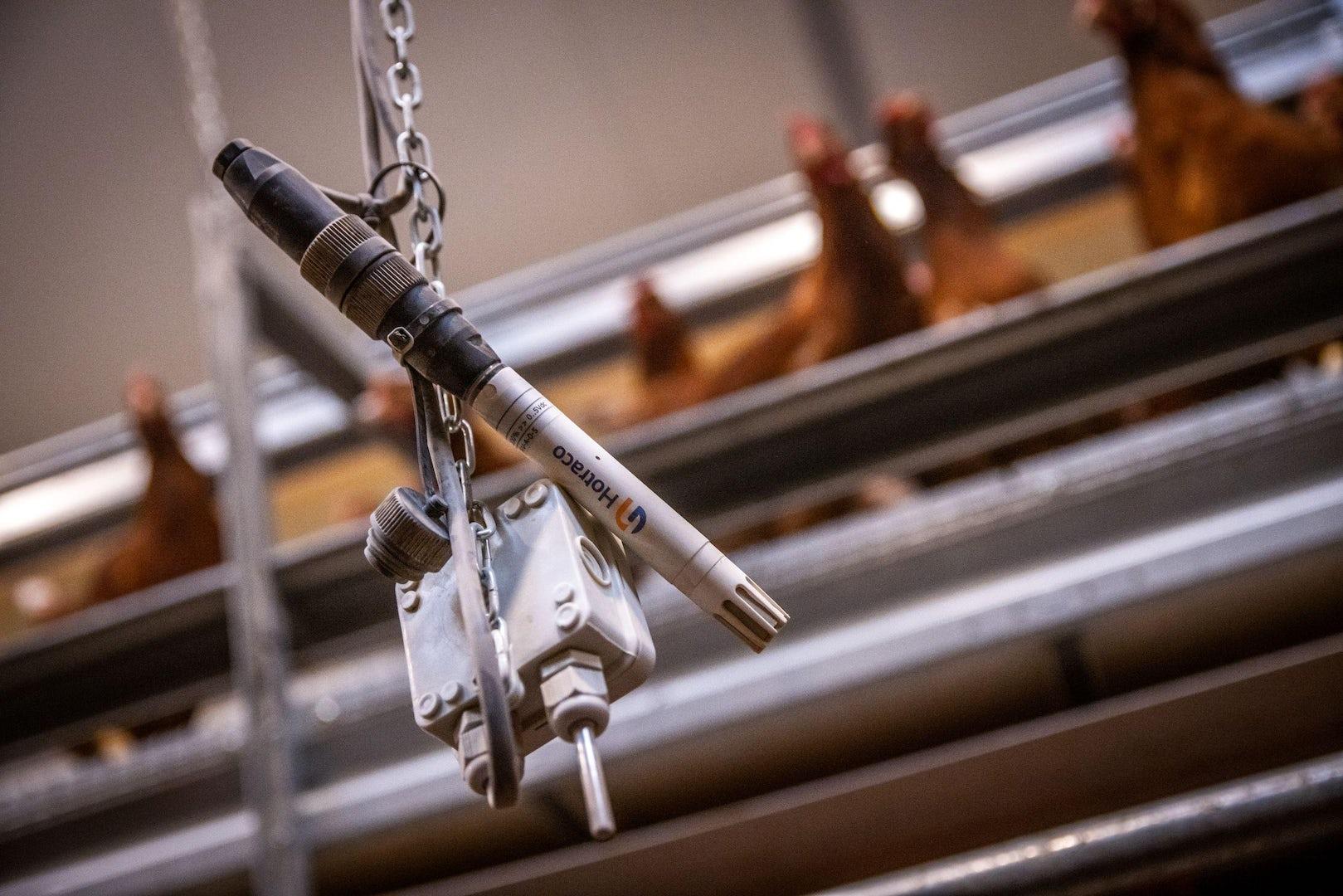 Poultry climate sensors Farm management