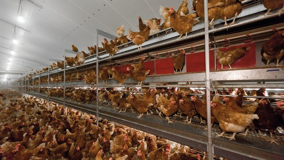 Poultry solutions Climate Header 2