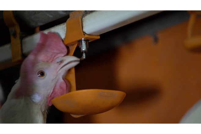 Poultry Solutions Feed water item 6 tekstblok water monitoring