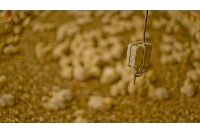 Poultry solutions Climate Item 1 tekstblok meet en regelapparatuur