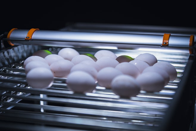 Egg Xact Egg counter MV 04070