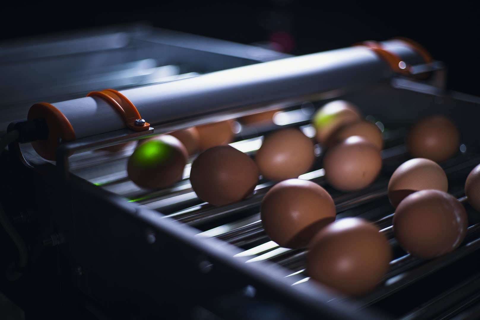 Egg Xact Egg counter MV 04146