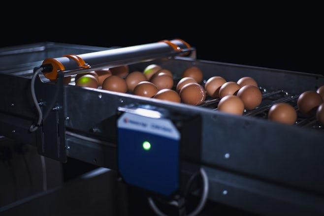 Egg Xact Egg counter MV 04151