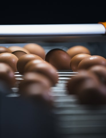 Egg Xact Egg counter MV 04200