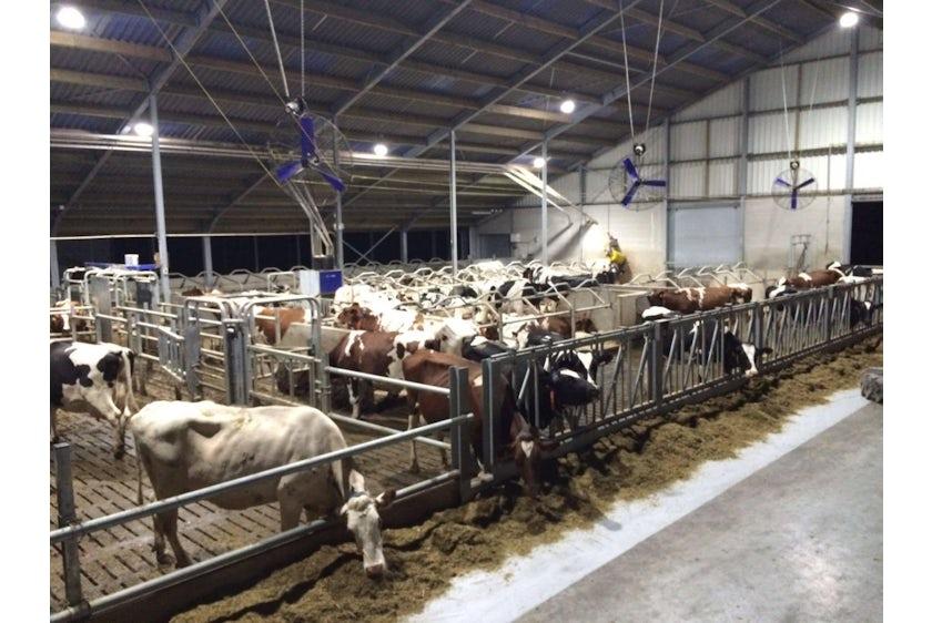 Belgium3 Cowsbarns3