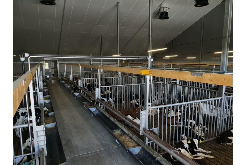 Calf stable in Hungary7
