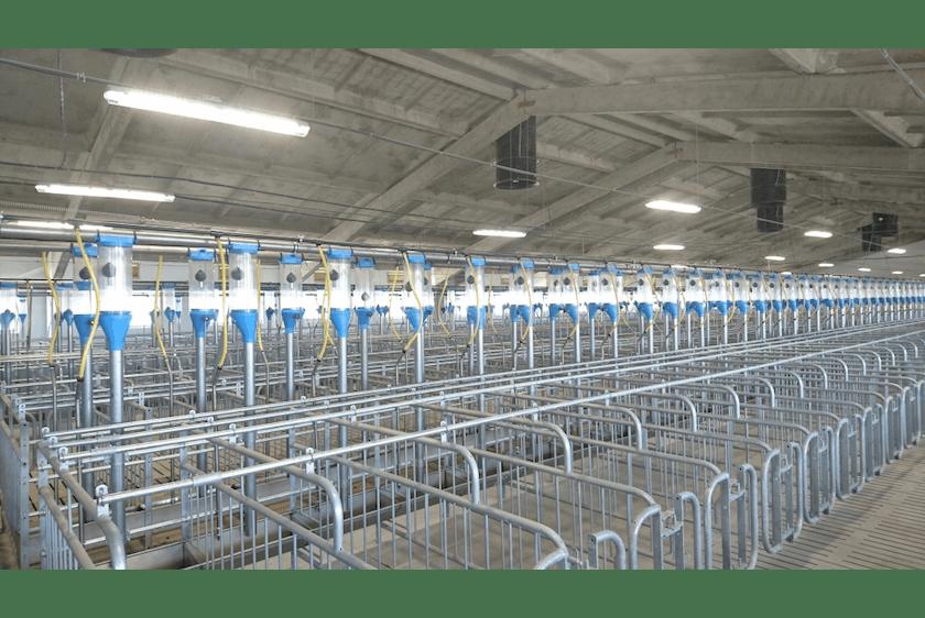 Belarus6 Large pig company completed in Belarus.jpg
