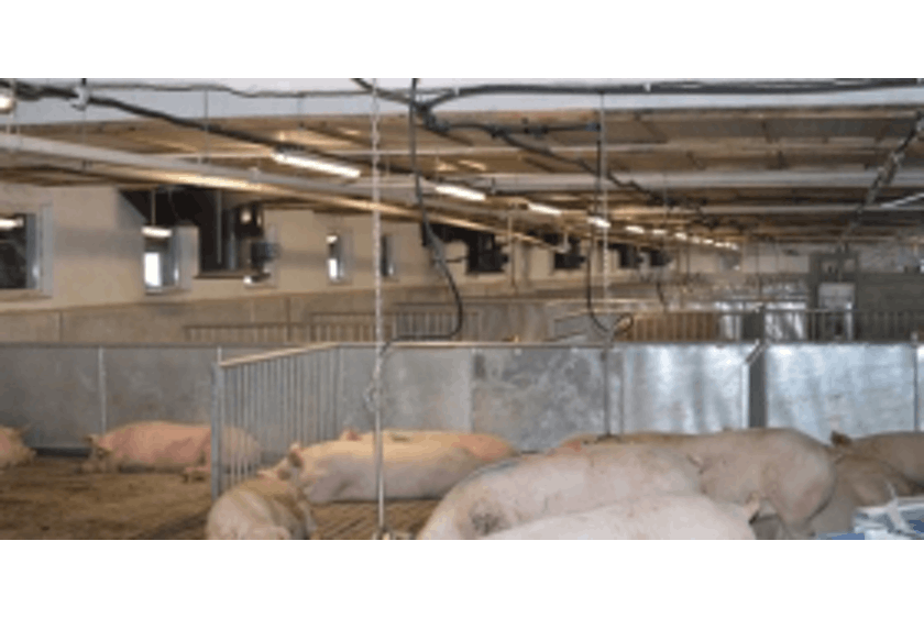 Bulgaria7 Sow barn with SmartFlow ventilation system in Bulgaria.jpg