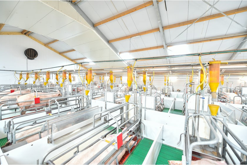 Netherlands7 Thomas successfully implemented at Dutch pig farm