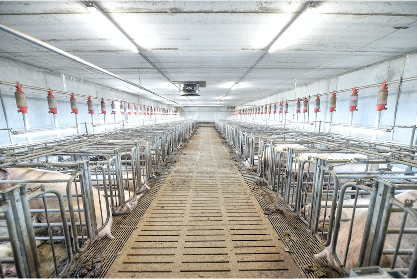 Netherlands8 Thomas successfully implemented at Dutch pig farm