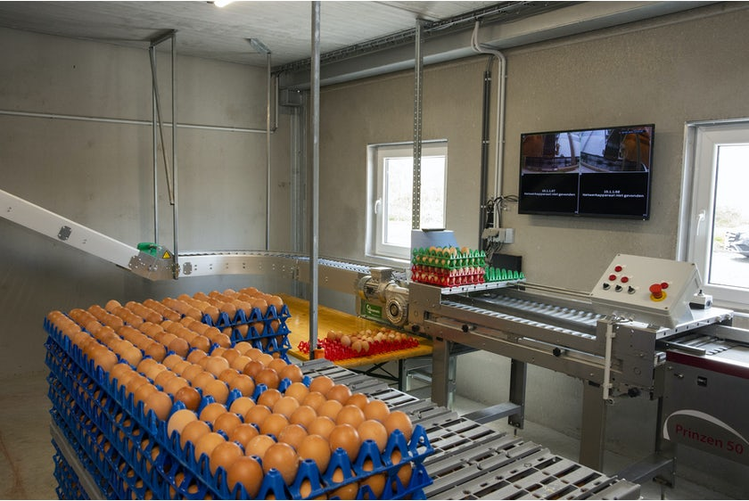 Belgian family Baudoin opens modern organic poultry house in Wallonia11