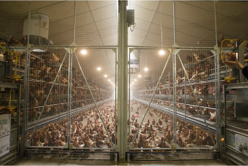 Belgian family Baudoin opens modern organic poultry house in Wallonia15