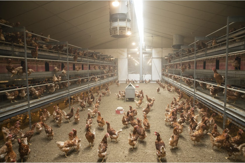 Belgian family Baudoin opens modern organic poultry house in Wallonia2