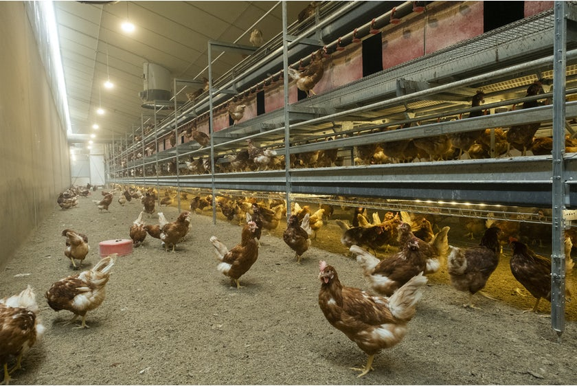 Belgian family Baudoin opens modern organic poultry house in Wallonia21
