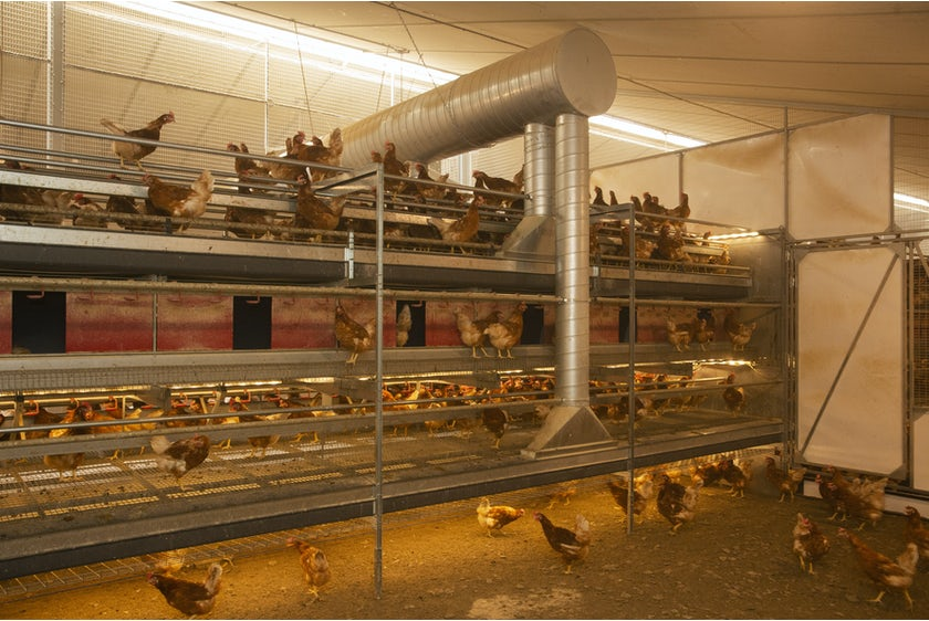 Belgian family Baudoin opens modern organic poultry house in Wallonia22