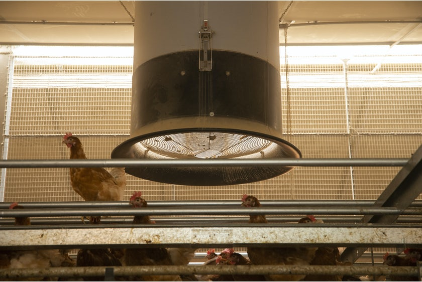 Belgian family Baudoin opens modern organic poultry house in Wallonia24