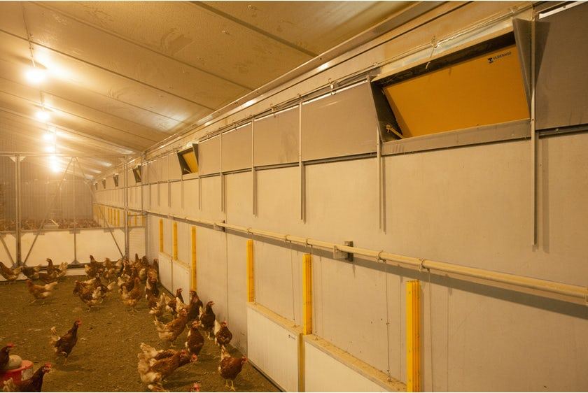 Belgian family Baudoin opens modern organic poultry house in Wallonia6
