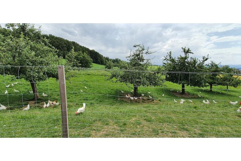 Bio Legehennenstall in der Schweiz9