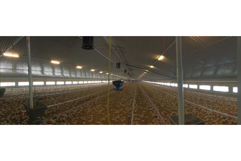 England1 Broiler houses in England automated with Fortica system