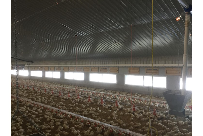 England3 Broiler houses in England automated with Fortica system