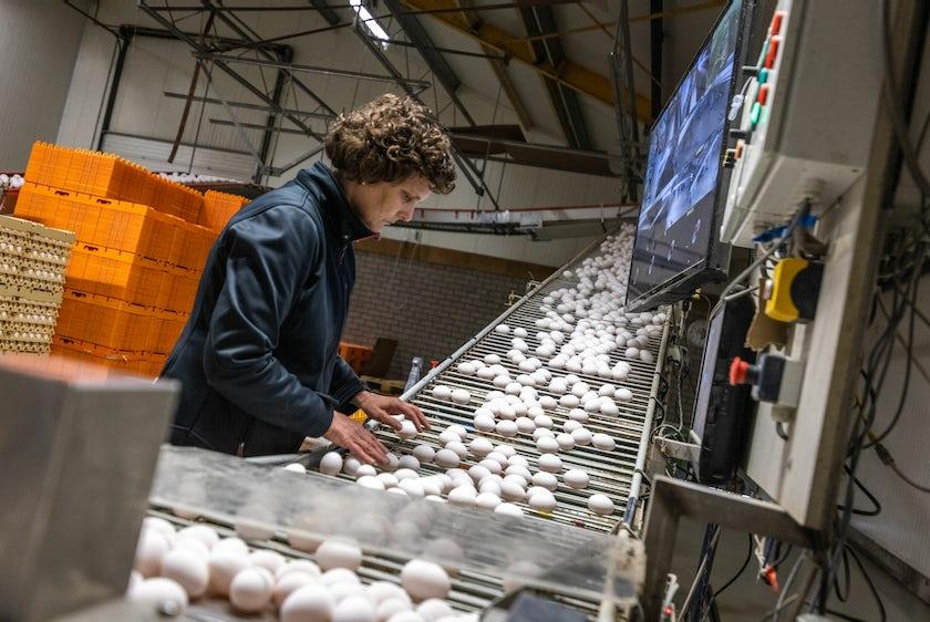 Hotraco vanleendert pluimvee schakelkast eierverzameling