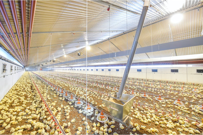 Netherlands10 Broiler farmer upgrades from Orion to Fortica system