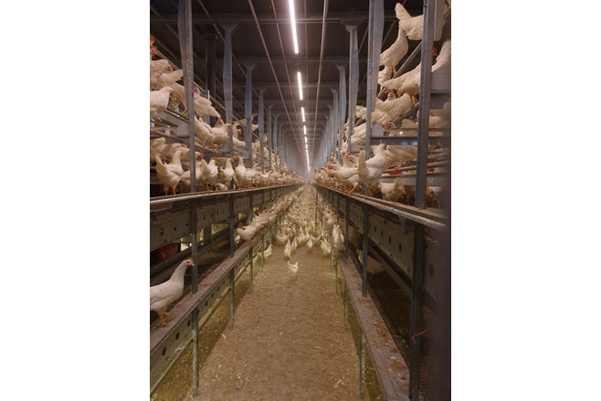 Cage free layer project Ohio USA0