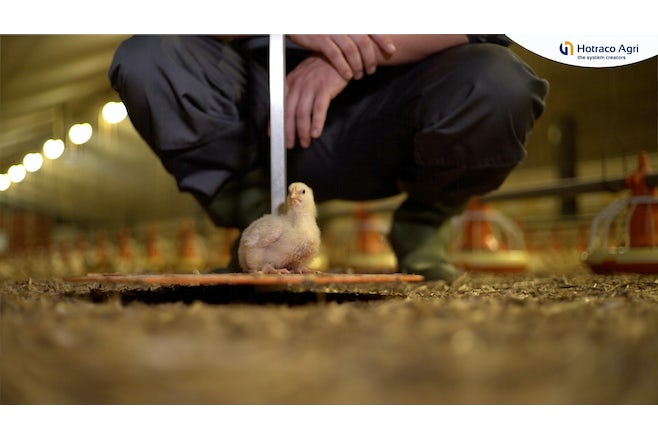 Video-animal-weighing-poultry-broilers
