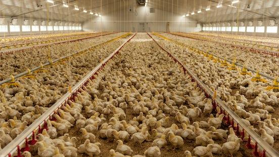 Solutions Livestock Farming