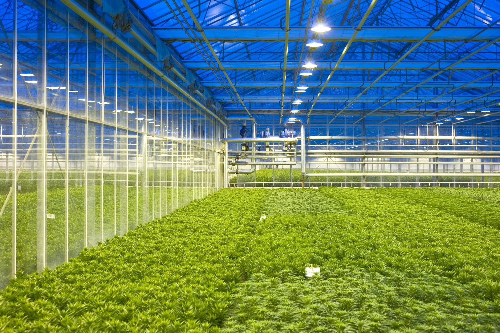 Greenhouse Lighting Verlichting hotraco