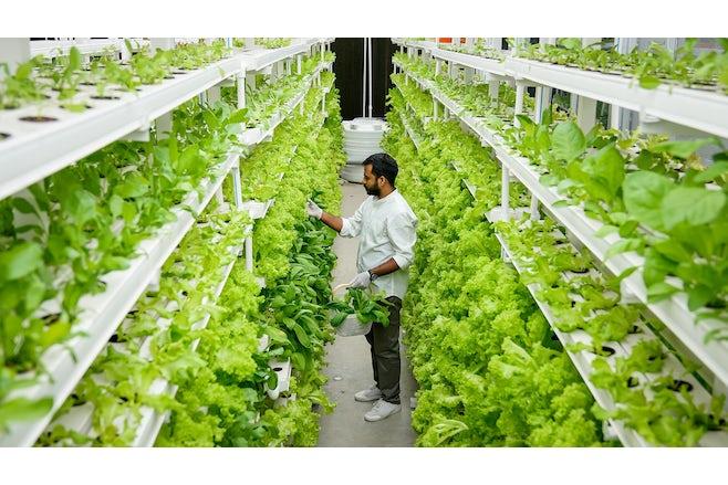 Vertical farm India