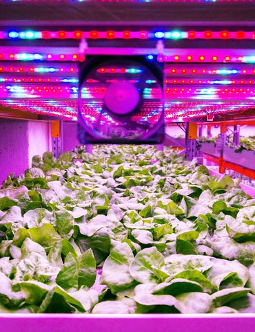 Vertical farming light fan