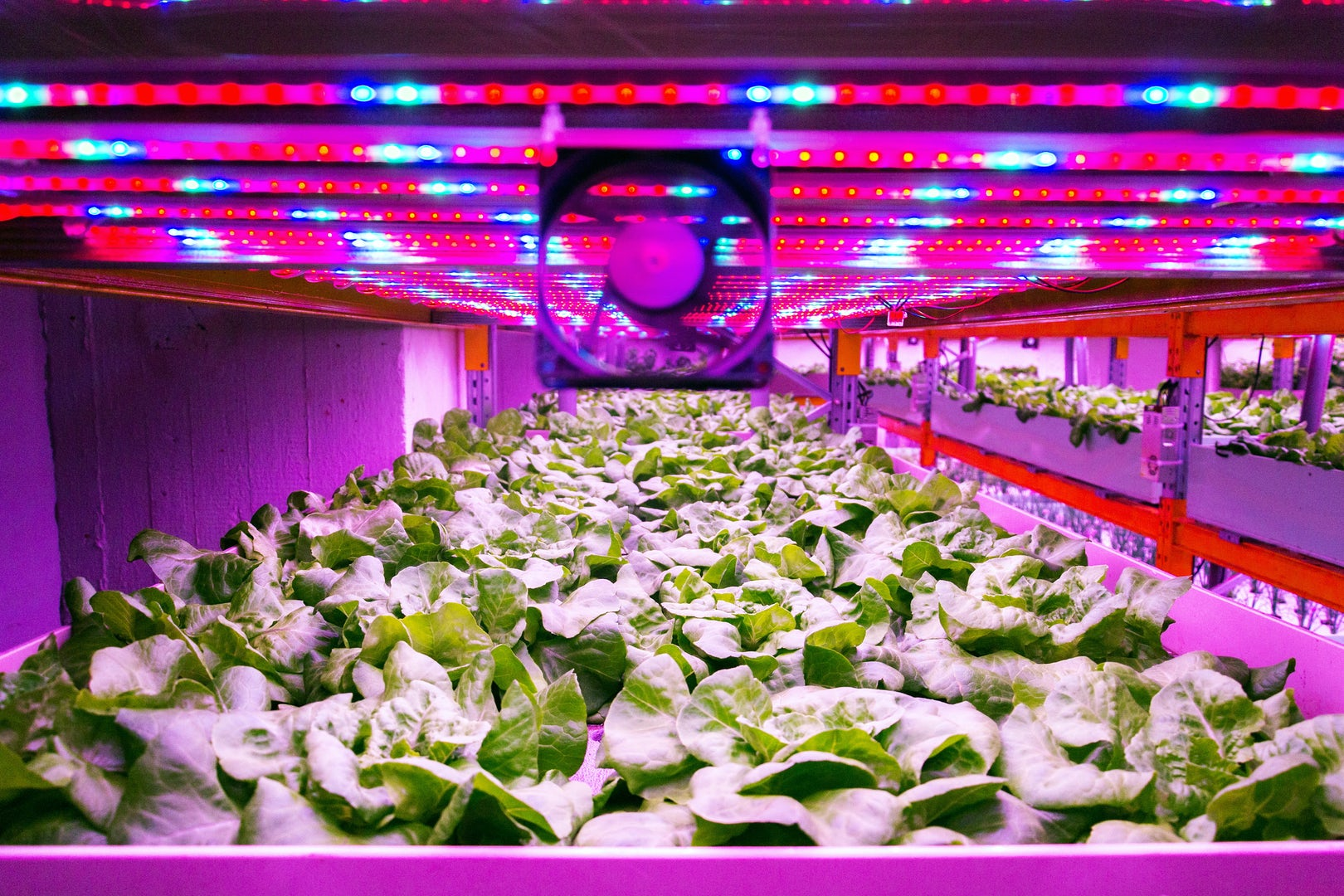 Vertical farming light fan