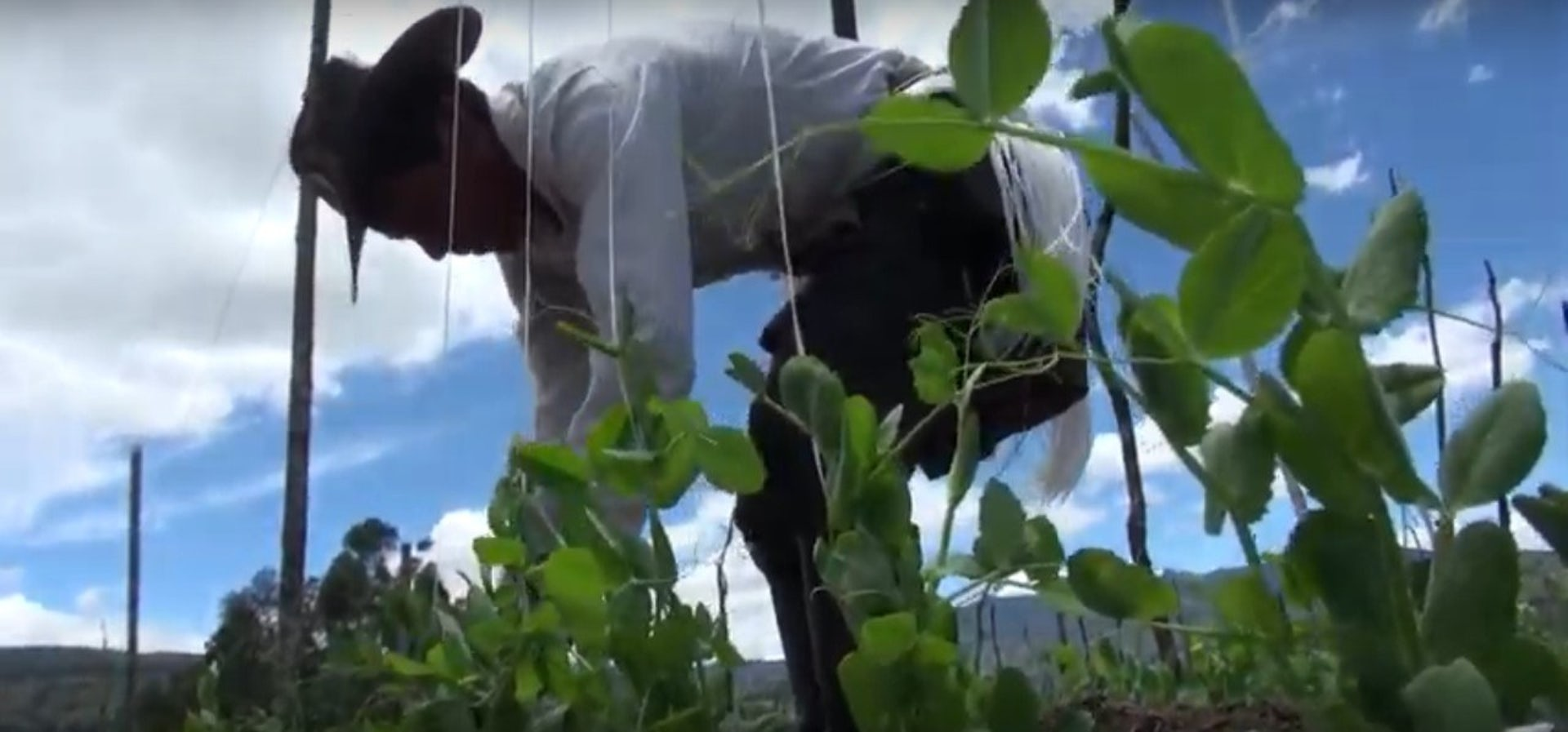 Agrosavia farmer