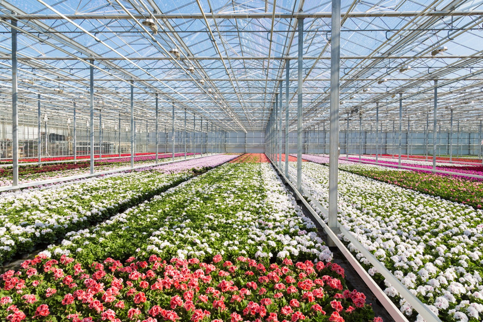 Greenhouse Flowers White Pink