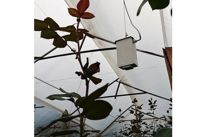 Roses Foil house Hotraco box