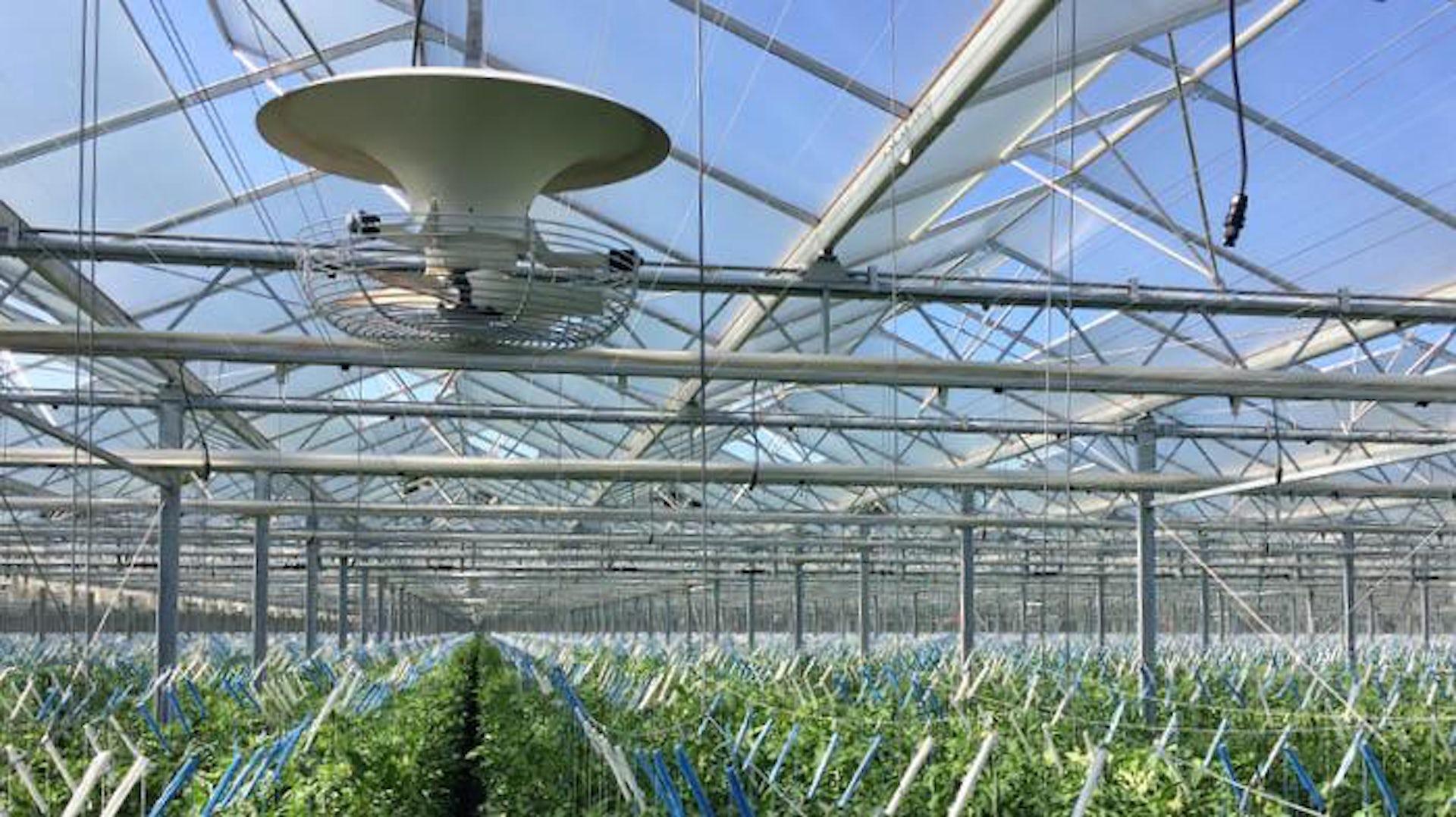 Greenhouse Fan 1