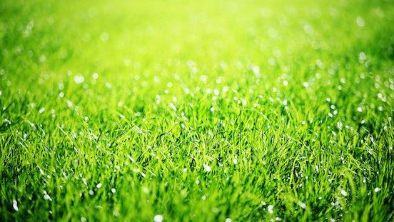 Green grass Seeds