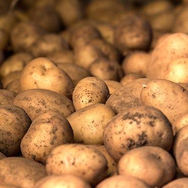 Storage Patatoes