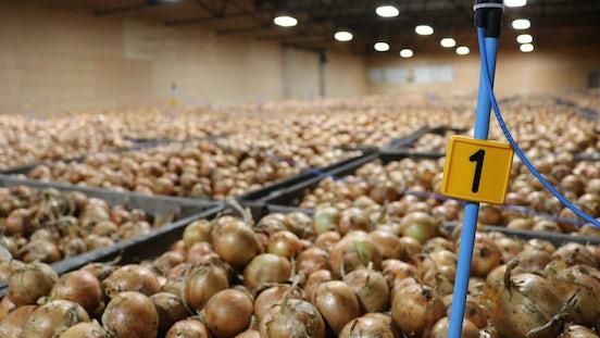 Temperature measuring boxes onions