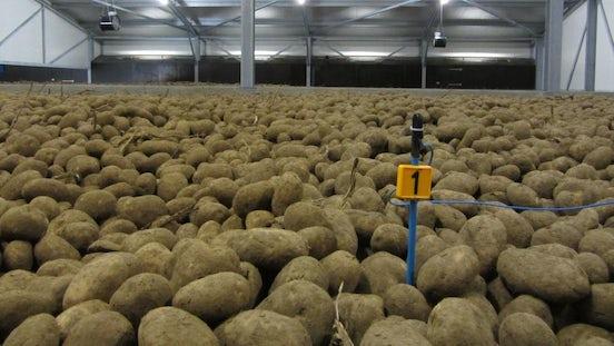 PT1000 Temperature sensor potatoes