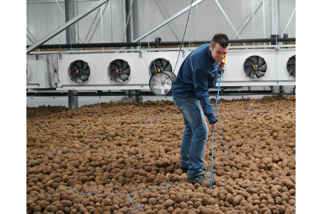 Young farmer measuring temperature of potatoes