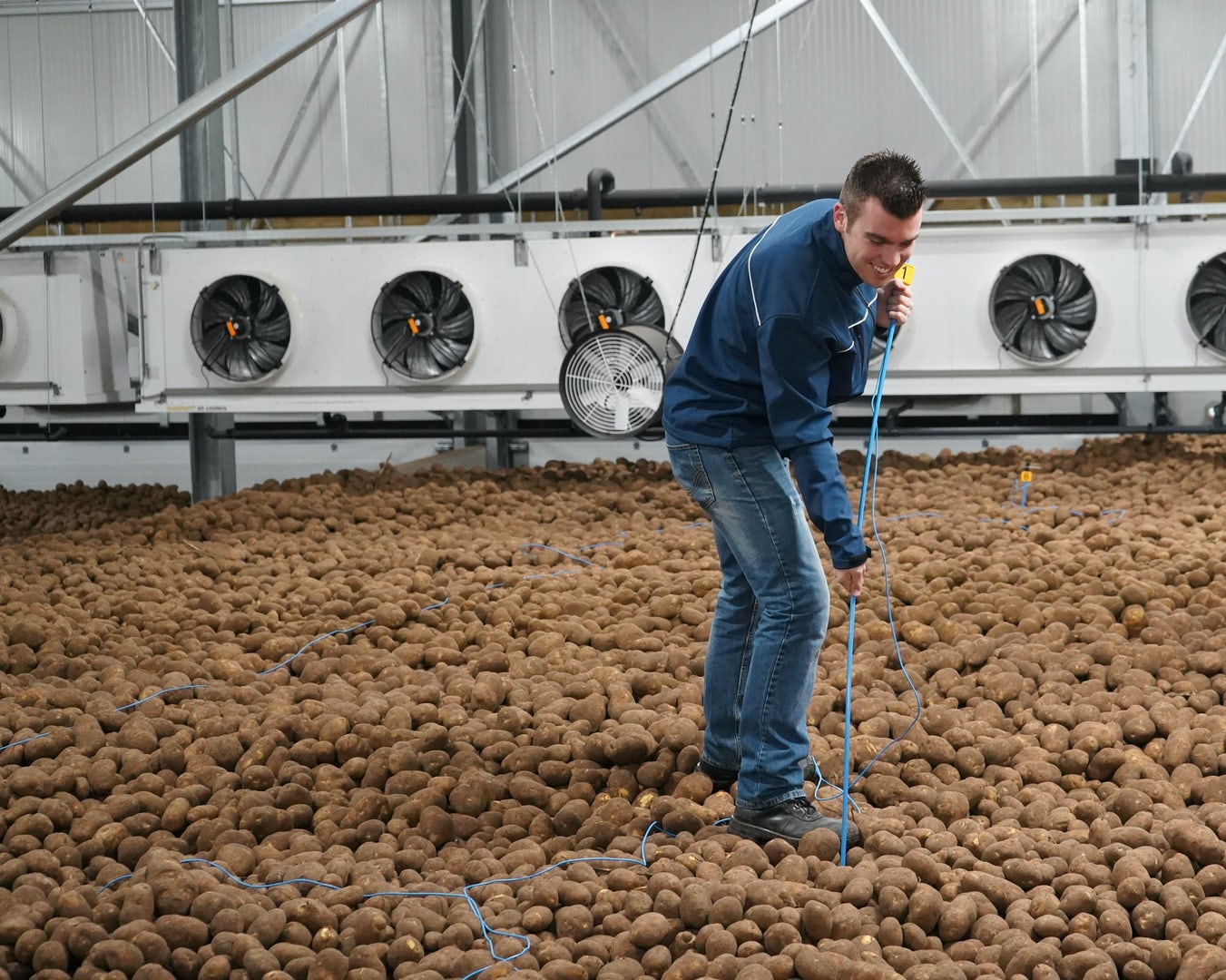 Young farmer measuring temperature of potatoes